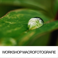 Workshop Macrofotografie
