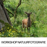 Workshop Natuurfotografie